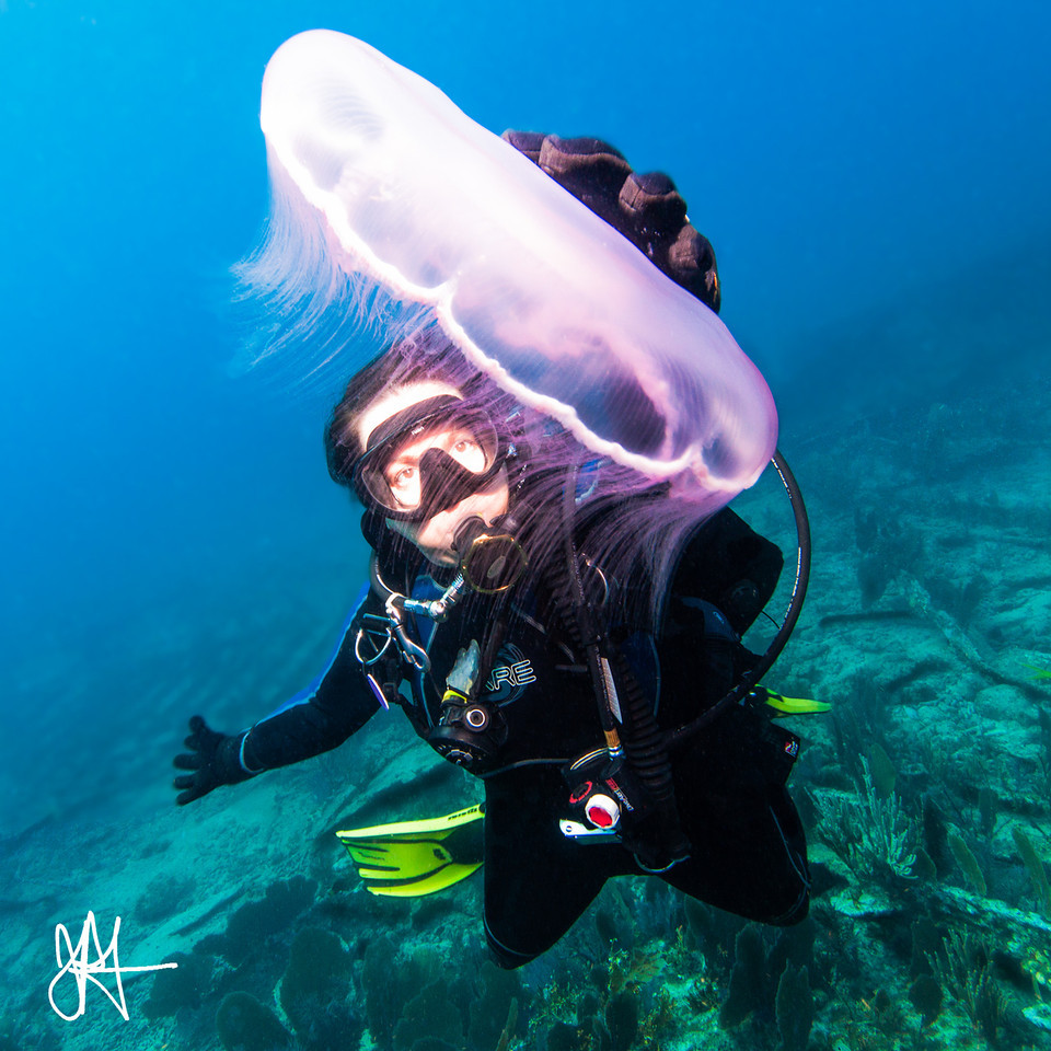 Diver and Moon Jellyfish, Key Largo, FL