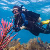 Open Water Certification - Learn to dive with the best!